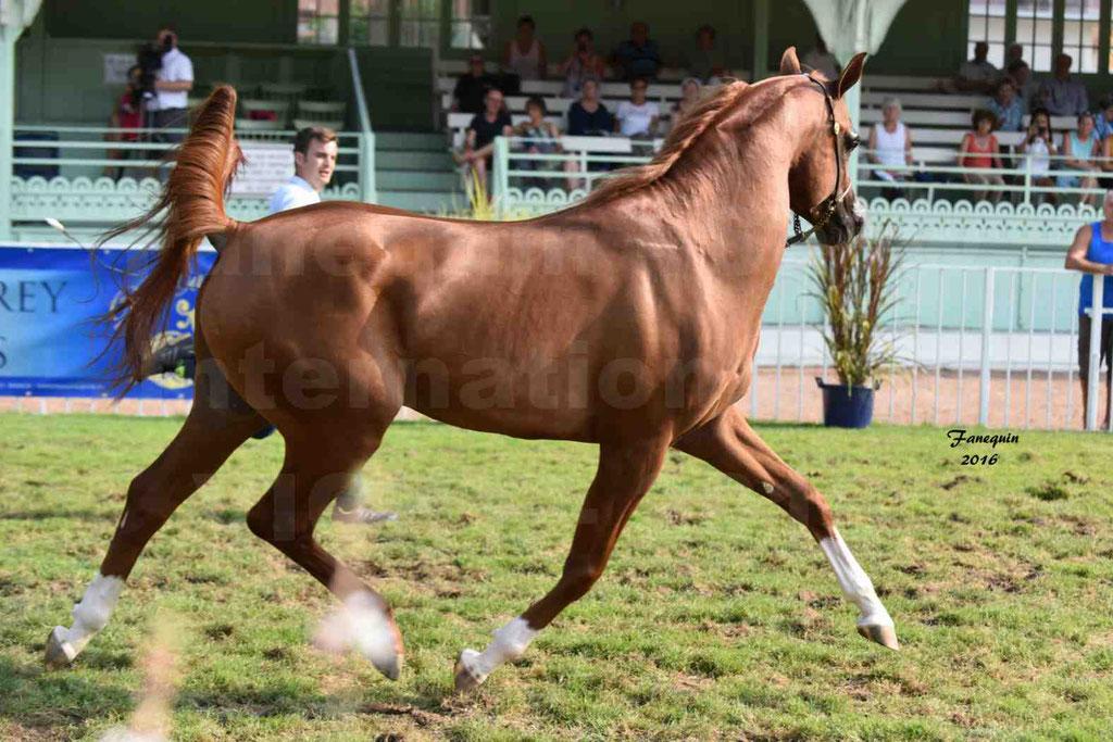 International Arabian Horse Show B de VICHY 2016 - DZHARI NUNKI - Notre Sélection - 21
