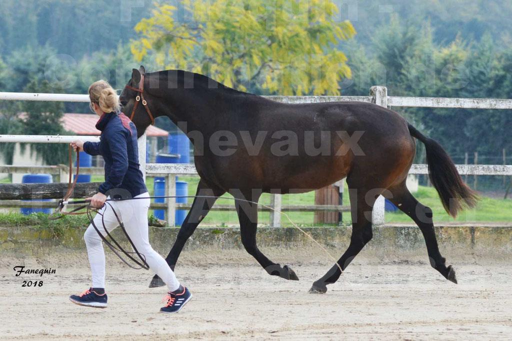 Confirmation de chevaux LUSITANIENS aux Haras d'UZES Novembre 2018 - LOUNA DU CASTEL - 07