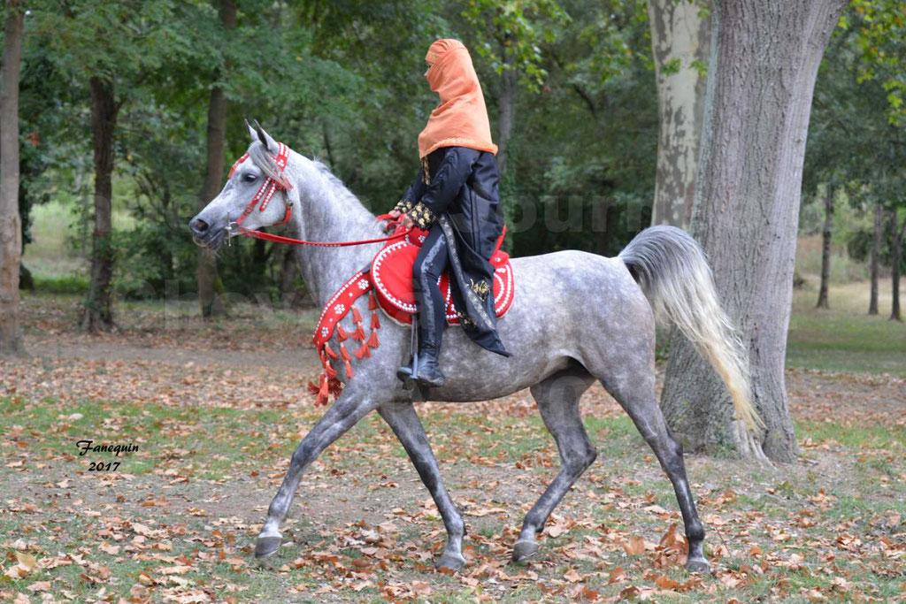 Fête du cheval à GRAULHET le 17 Septembre 2017 - Présentation de chevaux Arabes en main et monté élevage de GACIA - 2