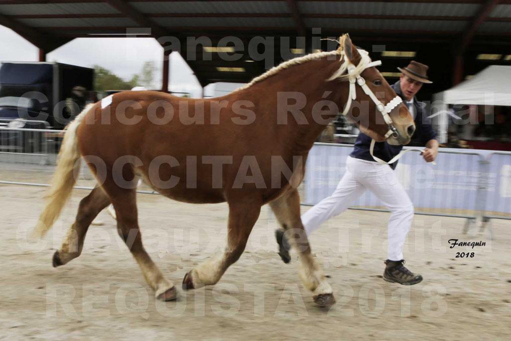 """Concours Régional """"OCCITANIE"""" de Chevaux de Traits à REQUISTA en 2018 - FAUVETTE DES BARDIS - 4"""
