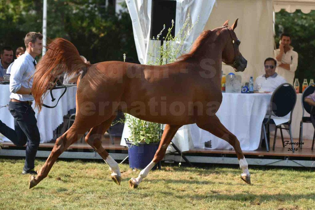 International Arabian Horse Show B de VICHY 2016 - DZHARI NUNKI - Notre Sélection - 41