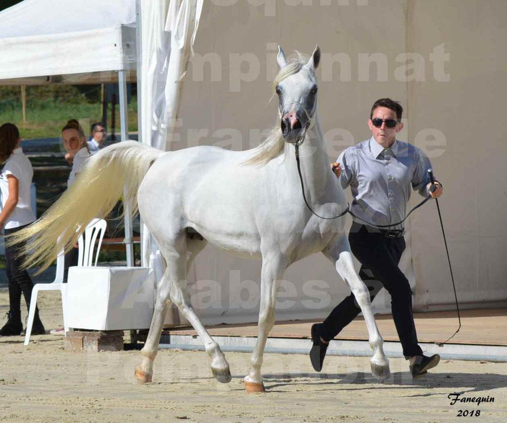 Championnat de FRANCE de chevaux Arabes à Pompadour en 2018 - ESTALIA - 04