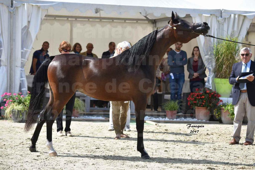 Championnat de France de chevaux Arabes à Pompadour les 19 & 20 Août 2017 - ESMAELIA AL HEVAN - 12