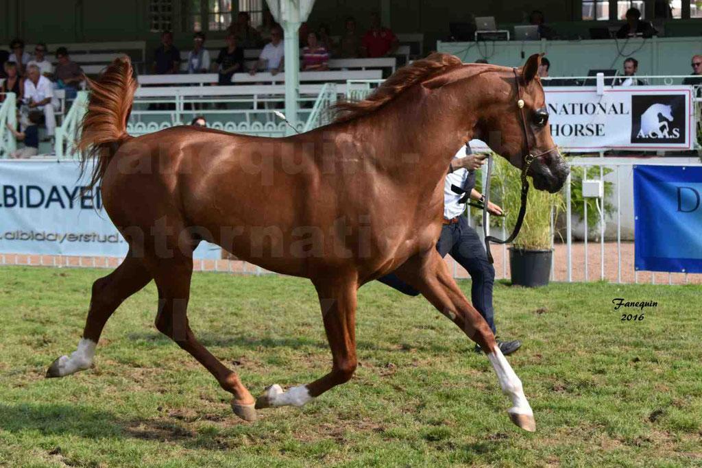 International Arabian Horse Show B de VICHY 2016 - DZHARI NUNKI - Notre Sélection - 18