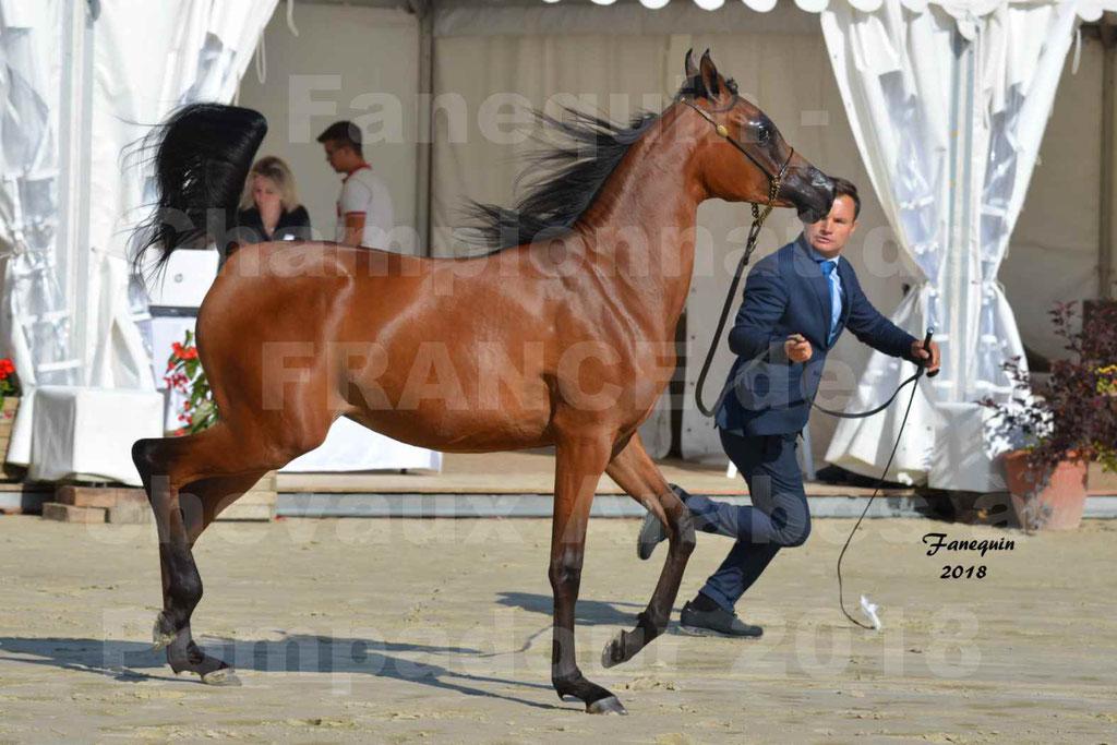 Championnat de FRANCE de chevaux Arabes à Pompadour en 2018 - BO AS ALEXANDRA - Notre Sélection - 33