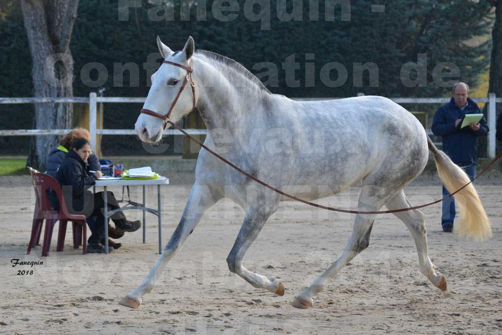 Confirmation de chevaux LUSITANIENS aux Haras d'UZES Novembre 2018 - LUTECE DU CASTEL - 17
