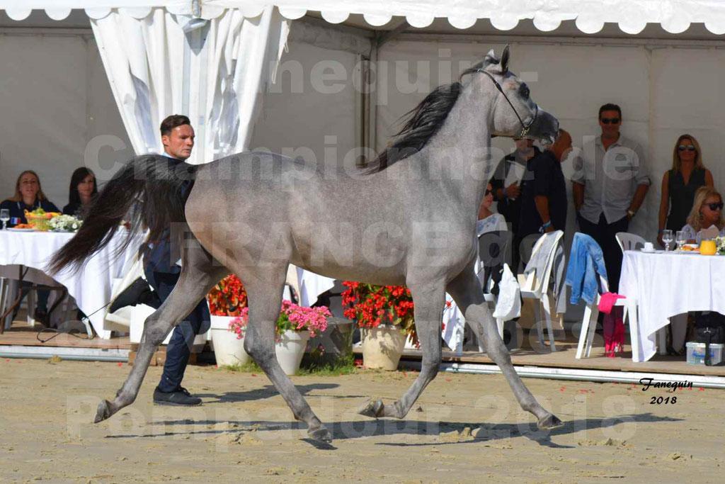 Championnat de FRANCE de chevaux Arabes à Pompadour en 2018 - SANIA DU CAYRON - Notre Sélection - 40