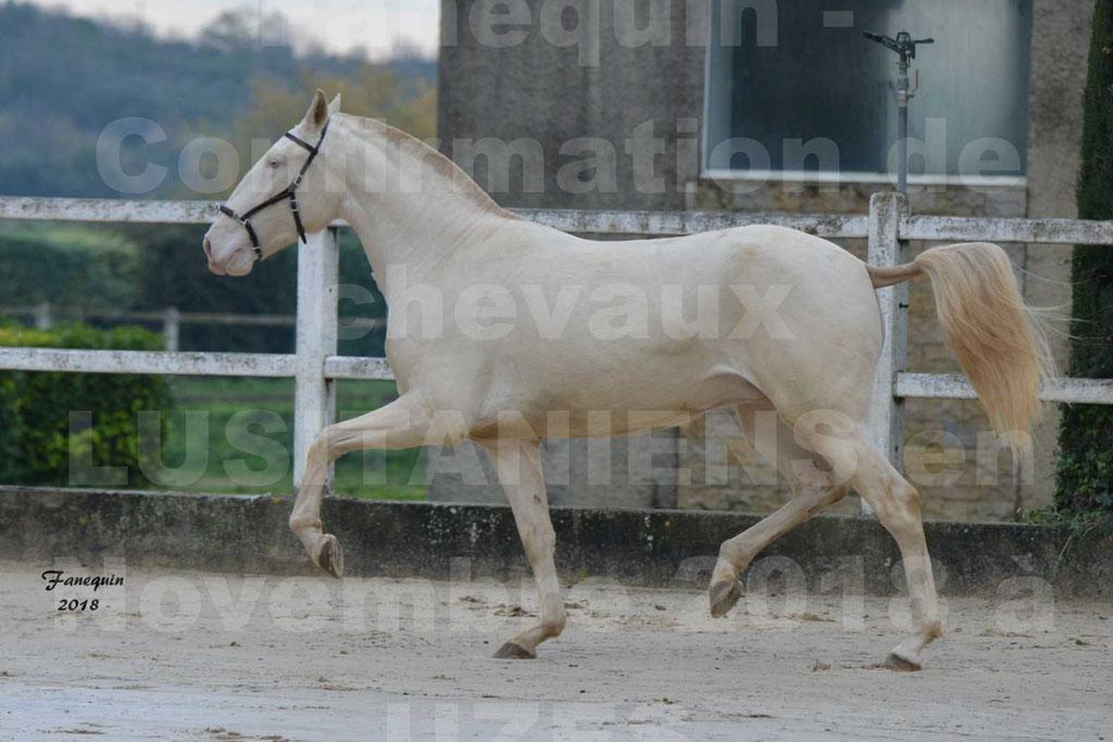 Confirmation de chevaux LUSITANIENS aux Haras d'UZES Novembre 2018 - LOLIBLOU - 29