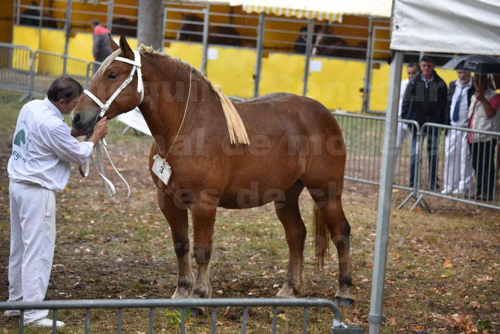 Concours Régional de chevaux de traits en 2017 - Trait COMTOIS - FIDJY DE GRILLOLES - 02