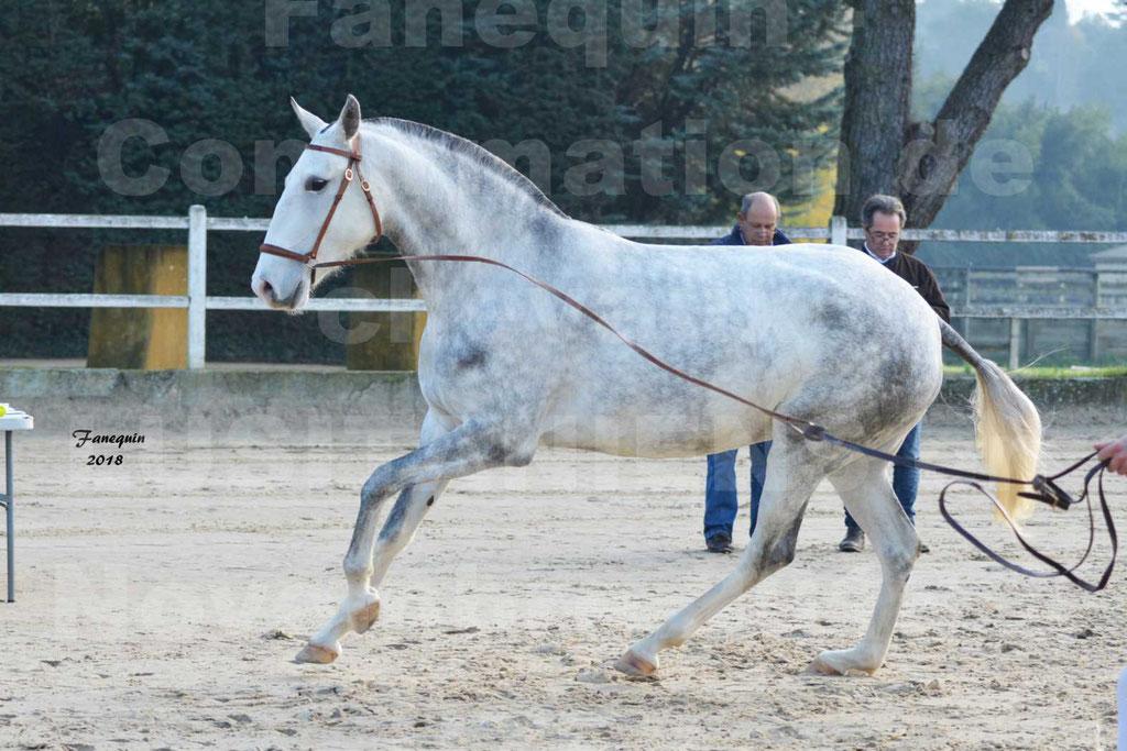 Confirmation de chevaux LUSITANIENS aux Haras d'UZES Novembre 2018 - LUTECE DU CASTEL - 23