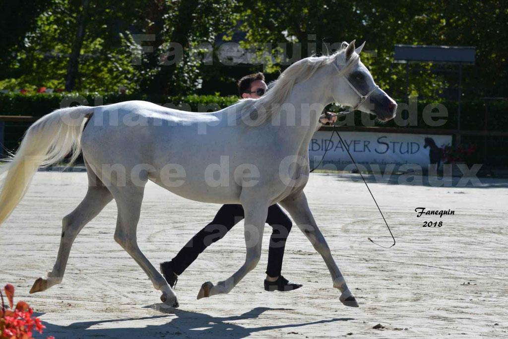 Championnat de FRANCE de chevaux Arabes à Pompadour en 2018 - ESTALIA - 24