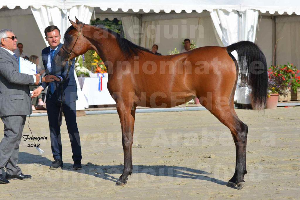 Championnat de FRANCE de chevaux Arabes à Pompadour en 2018 - BO AS ALEXANDRA - Notre Sélection - 45