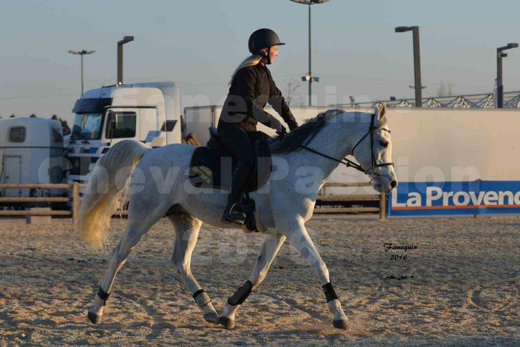 Cheval Passion 2016 - Présentation extérieure de chevaux Arabes montés - 14
