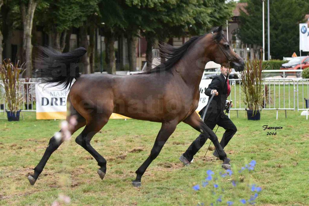 International Arabian Horse Show B de VICHY 2016 - MILLIAR - Notre Sélection - 05