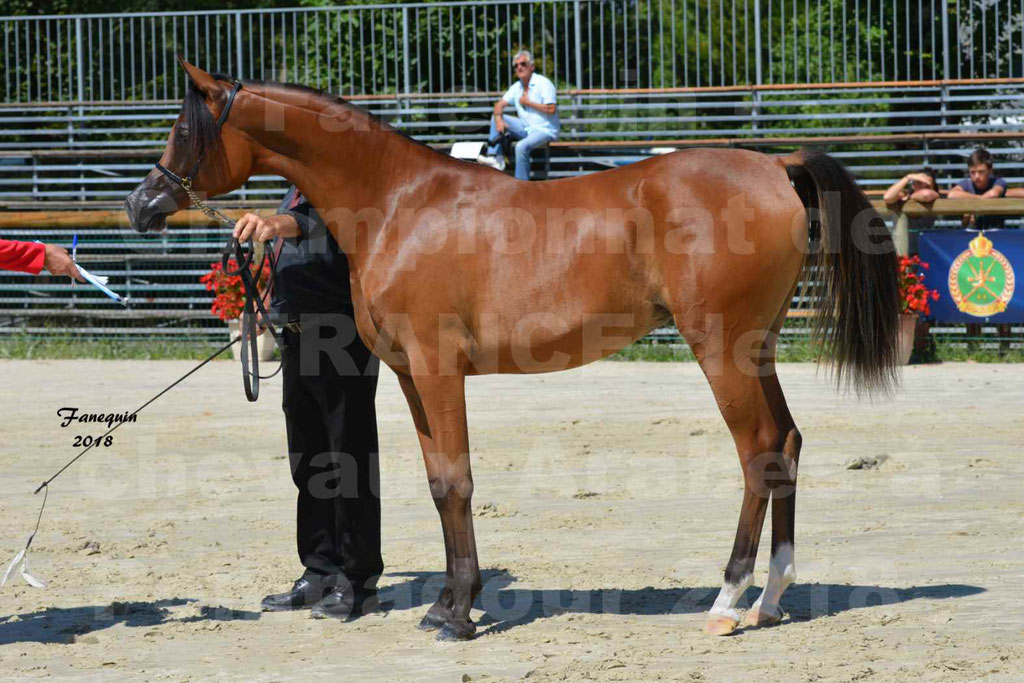 Championnat de FRANCE des chevaux Arabes à Pompadour en 2018 - SH CHARISMA - Notre Sélection - 33