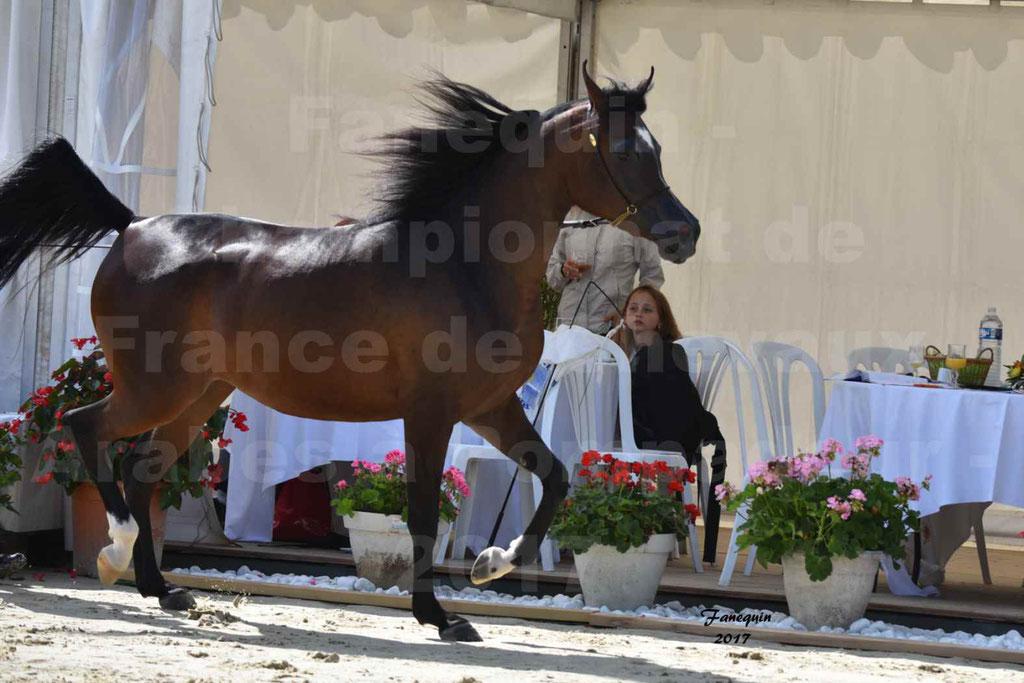 Championnat de France de chevaux Arabes à Pompadour les 19 & 20 Août 2017 - ESMAELIA AL HEVAN - 11