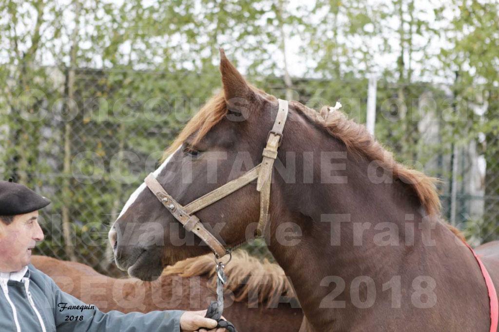 """Concours Régional """"OCCITANIE"""" Modèles et Allures de chevaux de trait à REQUISTA en 2018 - PORTRAITS - 29"""