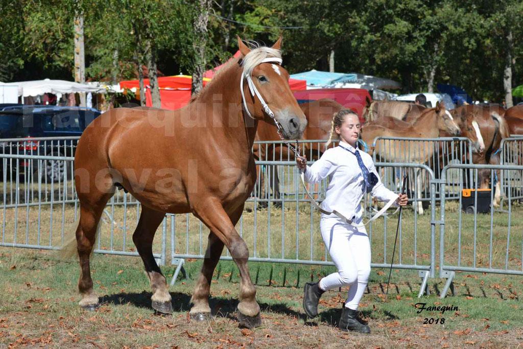 Fête du cheval à GRAULHET le 16 septembre 2018 - Concours Départemental de chevaux de traits - 18