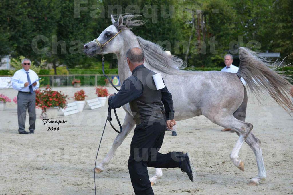 Championnat de FRANCE de chevaux Arabes à Pompadour en 2018 - SH CHAGALL - Notre Sélection - 09