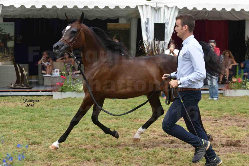 International Arabian Horse Show B de VICHY 2016 - ESMAELIA AL HEVAN - Notre Sélection - 13