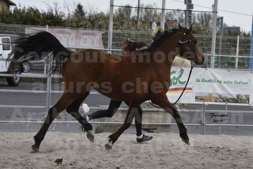Concours d'élevage de Chevaux Arabes - Demi Sang Arabes - Anglo Arabes - ALBI les 6 & 7 Avril 2018 - ELEGANTE PICAREL - Notre Sélection - 7