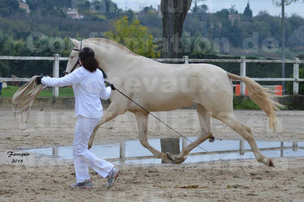 Confirmation de chevaux LUSITANIENS aux Haras d'UZES Novembre 2018 - LOLIBLOU - 05