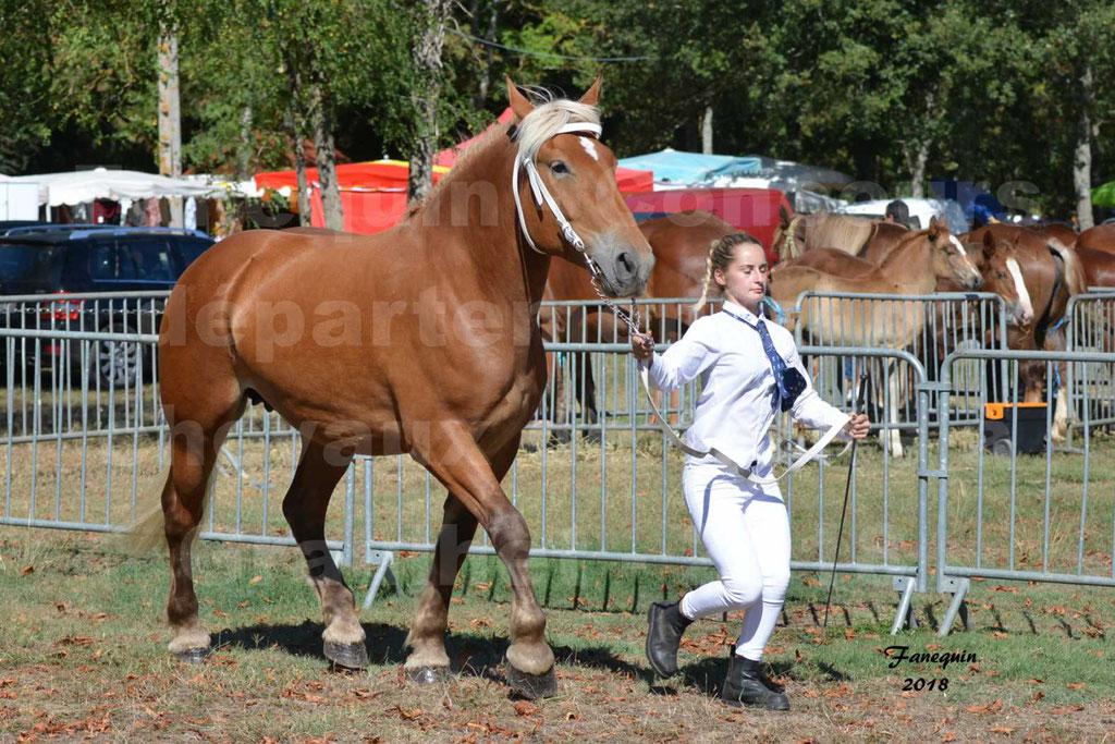 Concours départemental de chevaux de traits à GRAULHET en 2018 - Elevage POUJADE - Notre Sélection - 07