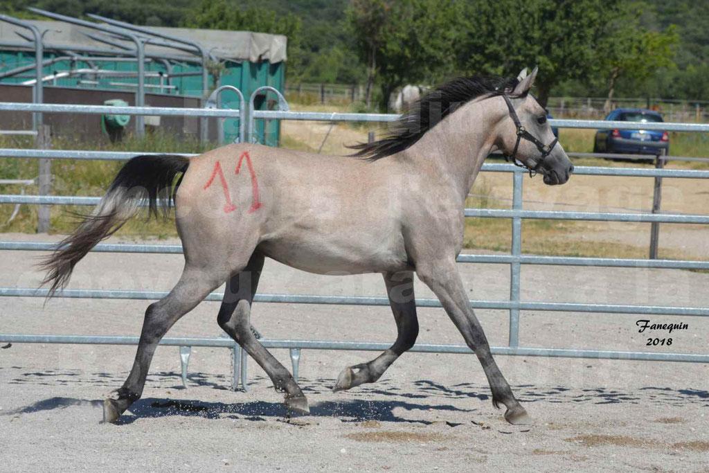 Concours d'Elevage de chevaux Arabes  le 27 juin 2018 à la BOISSIERE - GAZRAK D'AURIERES - 10