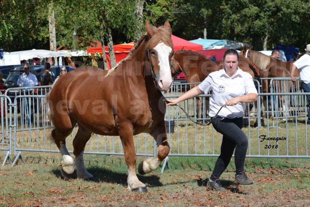 Fête du cheval à GRAULHET le 16 septembre 2018 - Concours Départemental de chevaux de traits - 10