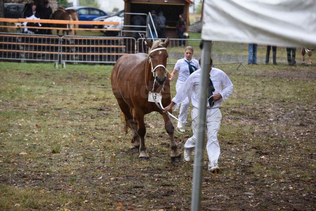 Concours Régional de chevaux de traits en 2017 - Trait COMTOIS - FIDJY DE GRILLOLES - 07