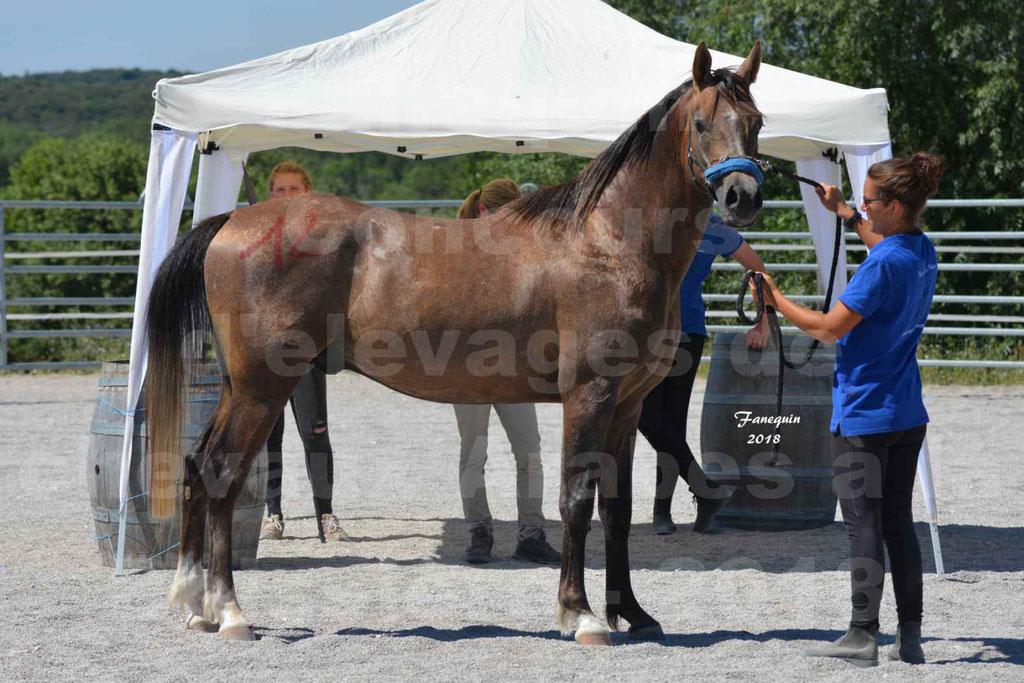 Concours d'Elevage de chevaux Arabes  le 27 juin 2018 à la BOISSIERE - MAREK LOTOIS - 17
