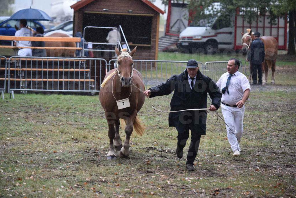 Concours Régional de chevaux de traits en 2017 - Trait COMTOIS - FANNY 61 - 08