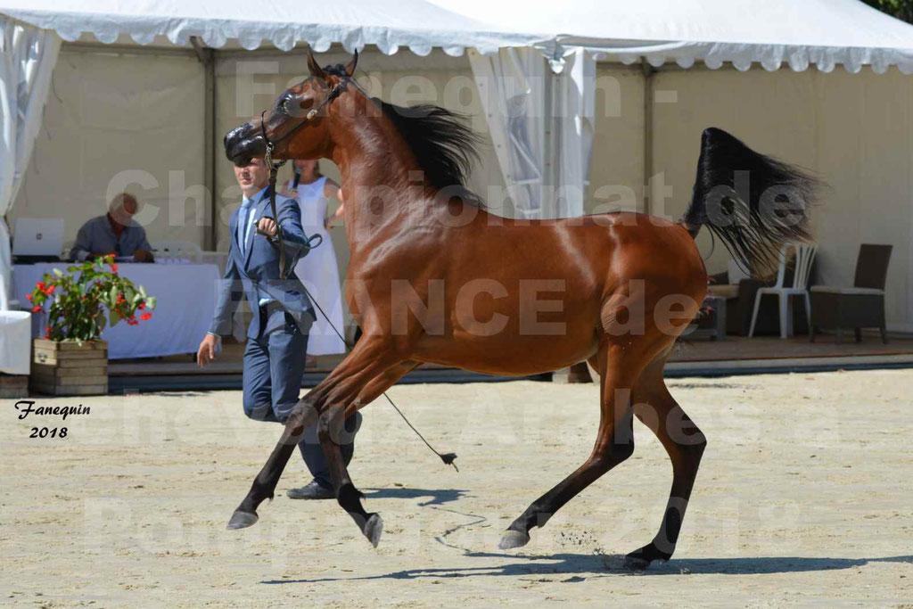 Championnat de FRANCE de chevaux Arabes à Pompadour en 2018 - BO AS ALEXANDRA - Notre Sélection - 06