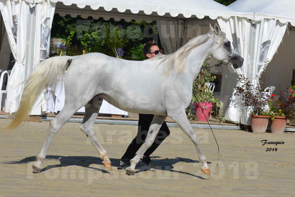 Championnat de FRANCE de chevaux Arabes à Pompadour en 2018 - ESTALIA - 31