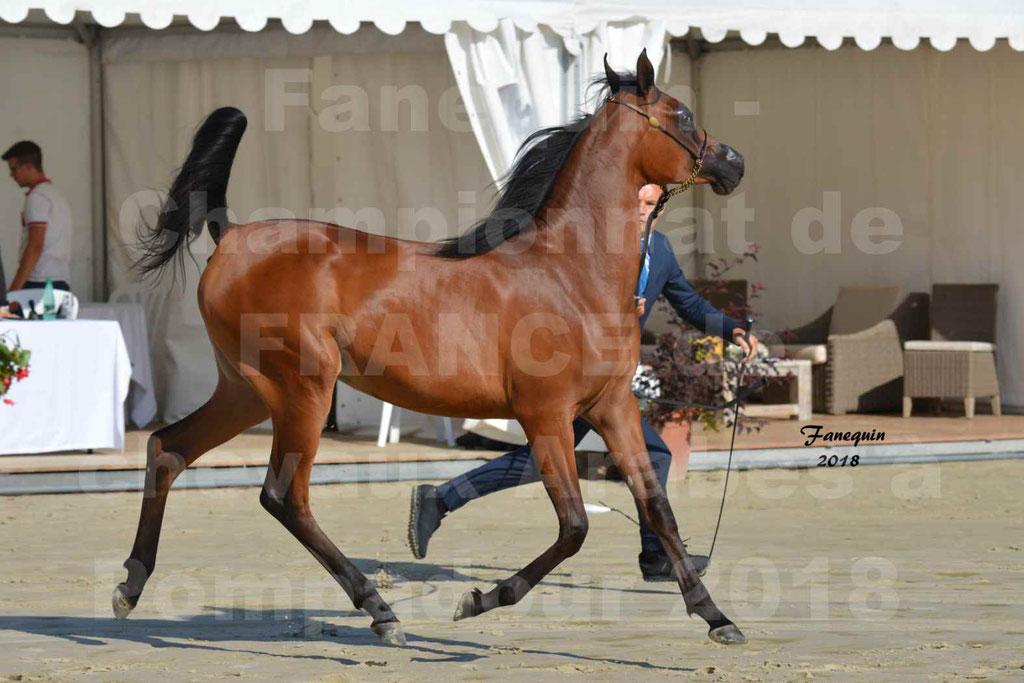 Championnat de FRANCE de chevaux Arabes à Pompadour en 2018 - BO AS ALEXANDRA - Notre Sélection - 34