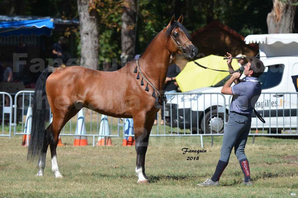 Fête du cheval à GRAULHET le 16 septembre 2018 - Présentation de chevaux Arabe Elevage de GACIA - 3
