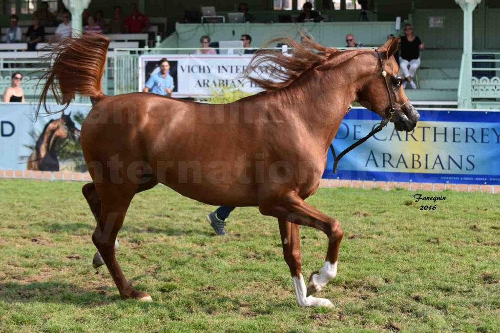International Arabian Horse Show B de VICHY 2016 - DZHARI NUNKI - Notre Sélection - 19