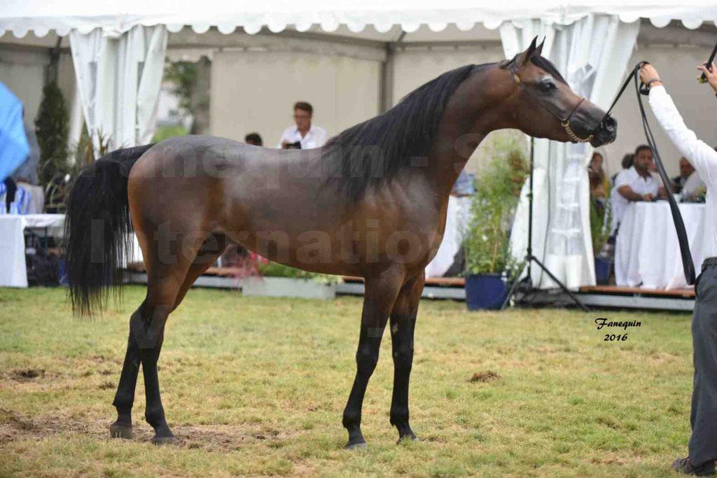 International Arabian Horse Show B de VICHY 2016 - MILLIAR - Notre Sélection - 36