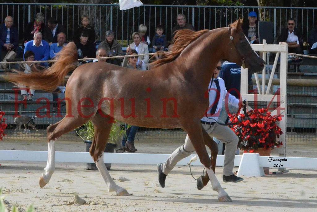 CHAMPIONNAT DE FRANCE 2014 A POMPADOUR - Notre Sélection - AINHOA LE BASQUE - 1