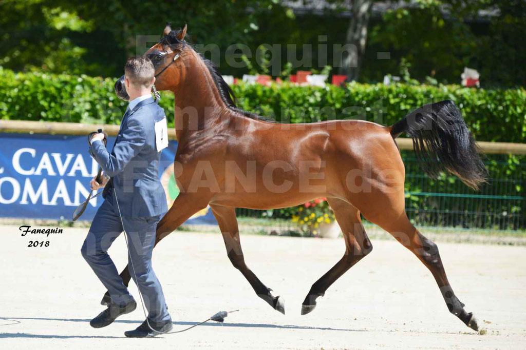 Championnat de FRANCE de chevaux Arabes à Pompadour en 2018 - BO AS ALEXANDRA - Notre Sélection - 11