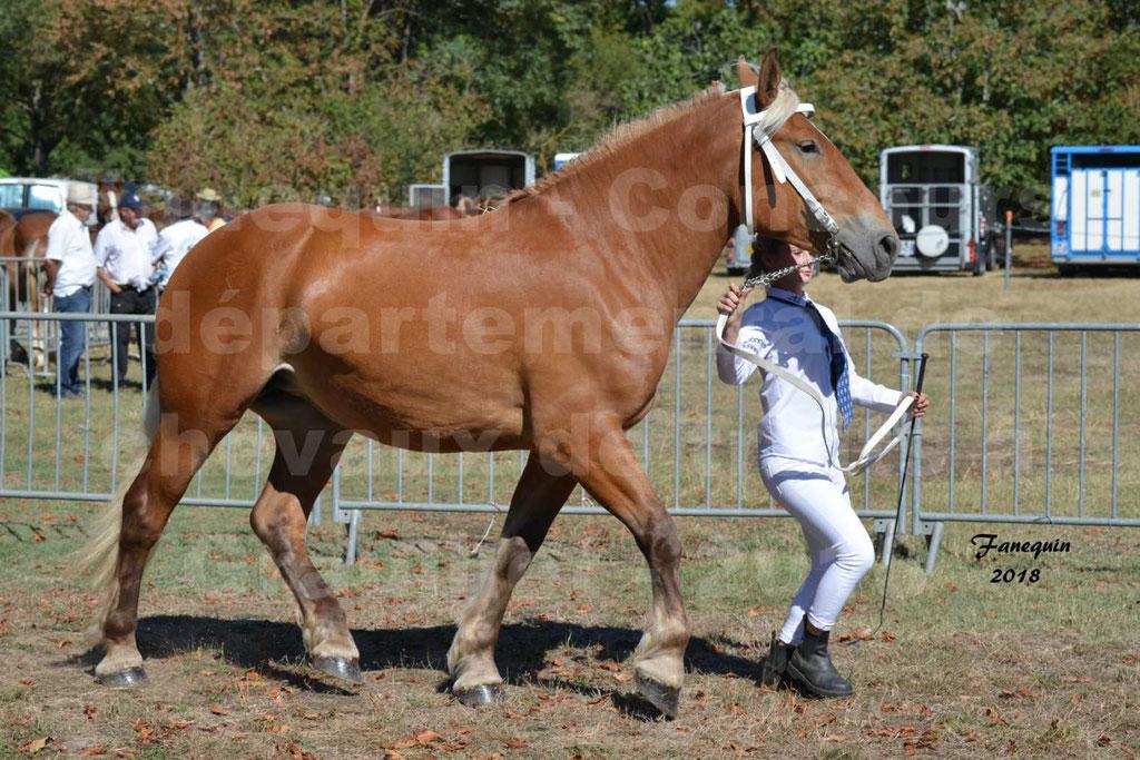 Concours départemental de chevaux de traits à GRAULHET en 2018 - Elevage POUJADE - Notre Sélection - 09