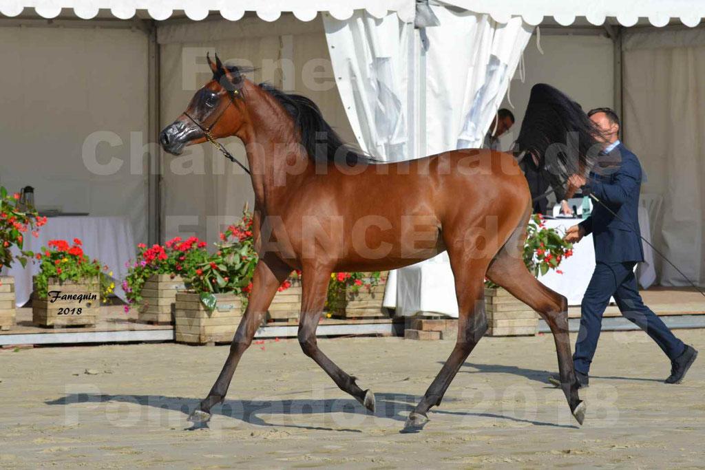 Championnat de FRANCE de chevaux Arabes à Pompadour en 2018 - BO AS ALEXANDRA - Notre Sélection - 27
