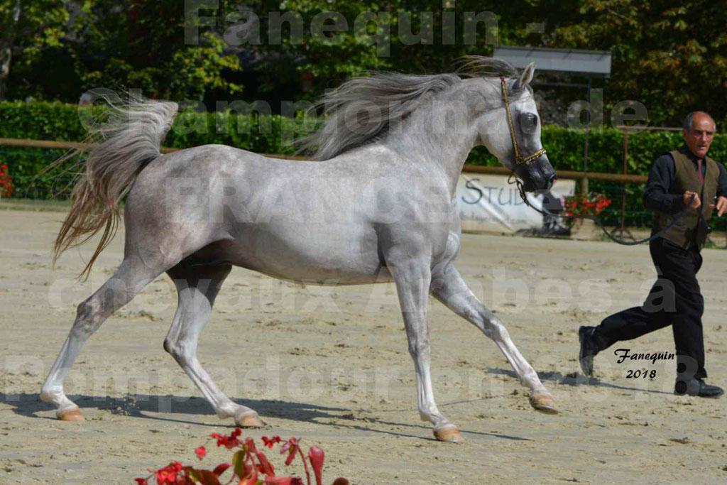 Championnat de FRANCE de chevaux Arabes à Pompadour en 2018 - SH CHAGALL - Notre Sélection - 07