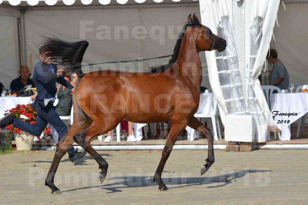 Championnat de FRANCE de chevaux Arabes à Pompadour en 2018 - BO AS ALEXANDRA - Notre Sélection - 20