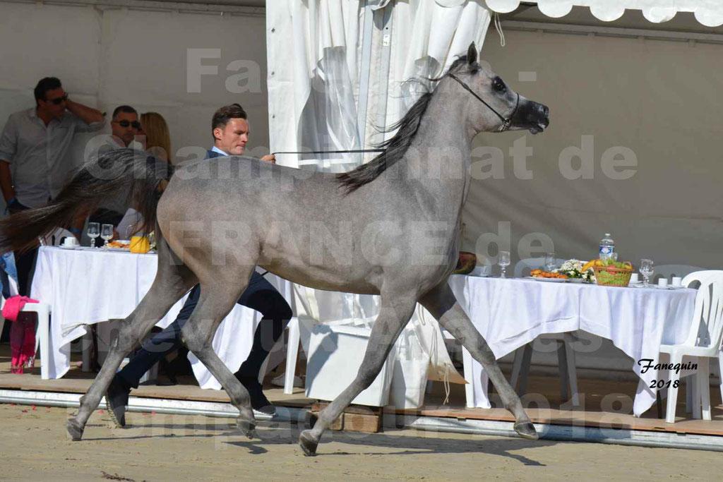 Championnat de FRANCE de chevaux Arabes à Pompadour en 2018 - SANIA DU CAYRON - Notre Sélection - 25