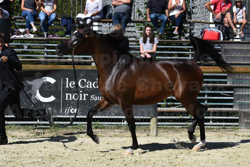 Championnat de France de chevaux Arabes à Pompadour les 19 & 20 Août 2017 - ESMAELIA AL HEVAN - 04