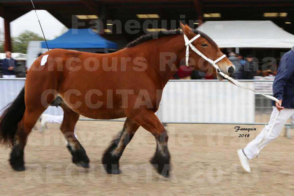 Concours Régional OCCITANIE de chevaux de traits à REQUISTA - COMETE DE GRILLOLES - 07