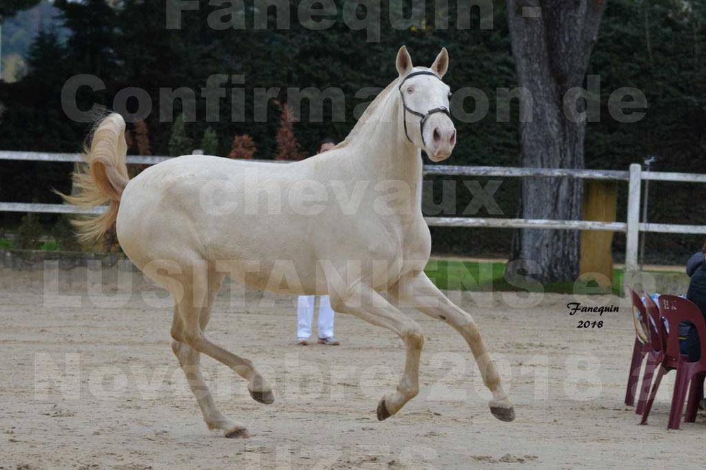 Confirmation de chevaux LUSITANIENS aux Haras d'UZES Novembre 2018 - LOLIBLOU - 23