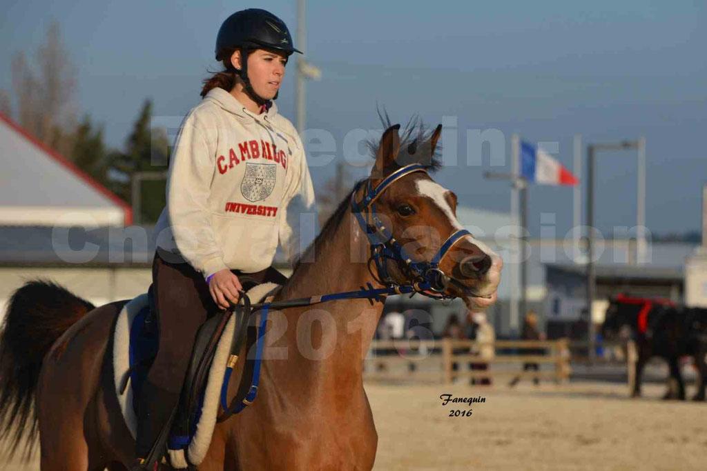 Cheval Passion 2016 - Présentation extérieure de chevaux Arabes montés - 03
