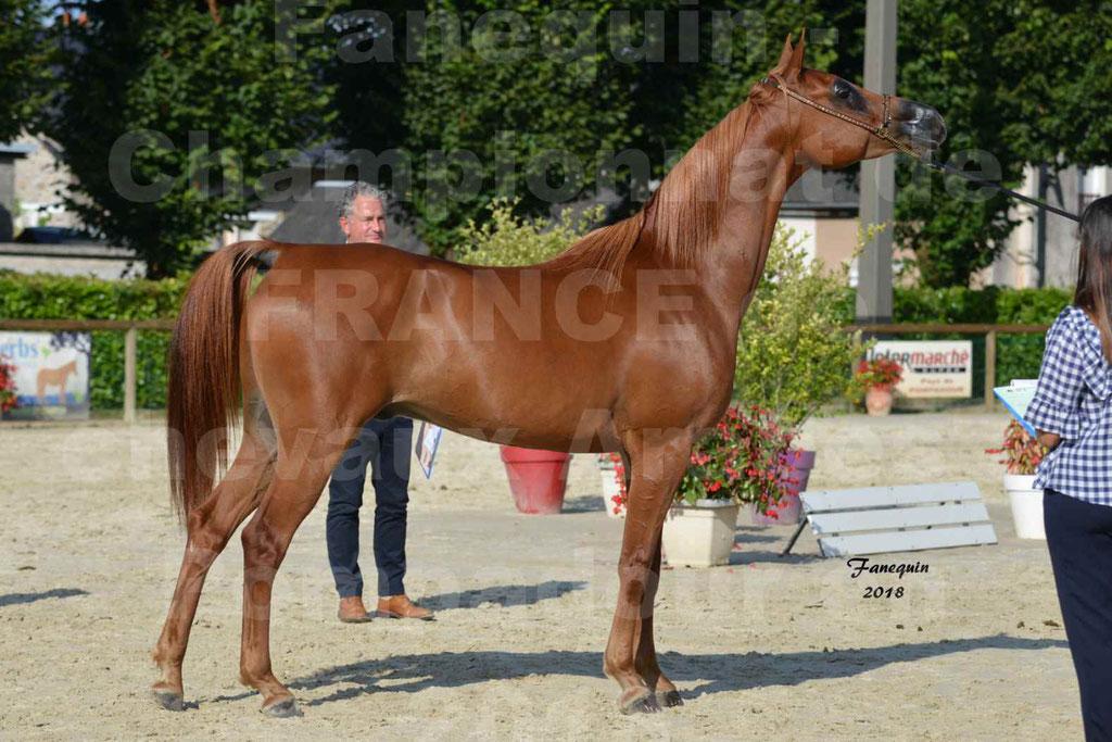 Championnat de FRANCE de chevaux Arabes à Pompadour 2018 - MAAMAR ISHANE - Notre Sélection - 23